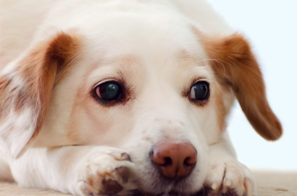 Free photo 95868525 © creativecommonsphotos - Dreamstime.com